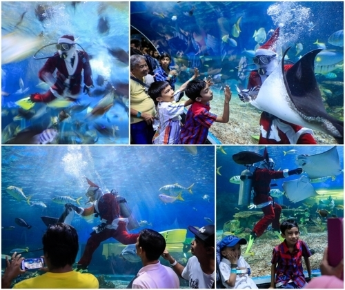 <strong>물속에서 만난 산타</strong> (EPA=연합뉴스)<br> 12월 14일 필리핀 마닐라 한 대형 수족관에서 산타클로스 복장의 잠수사가 관객들에게 멋진 쇼를 선보이고 있다.