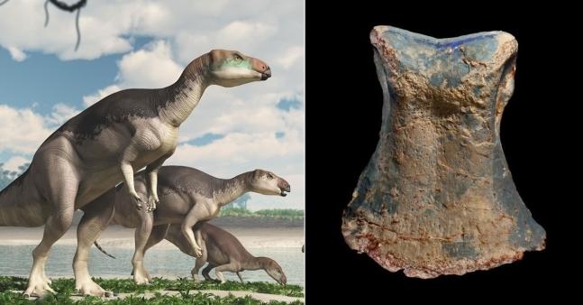 호주 오팔 광산서 발견된 '보석이 된 공룡'…신종으로 밝혀져
