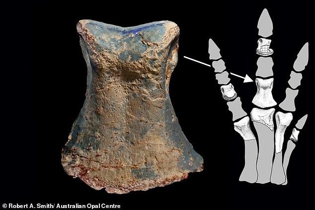오팔화 된 공룡 화석(사진=호주 오팔센터)